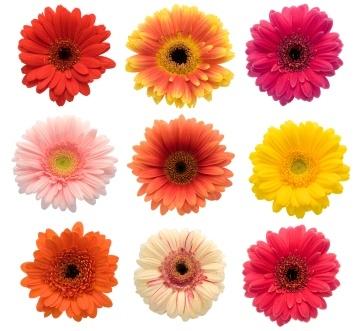 2017-06-02-12-07-42-birth flowers-1091650728